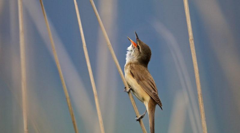 Les oiseaux à l'honneur pour les 10 ans du musée de l'Erdre.