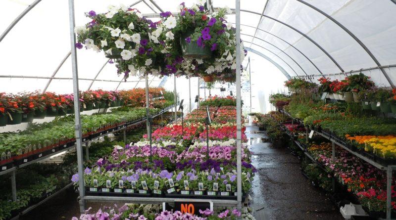 Le Salon du végétal ouvre ses portes demain au public